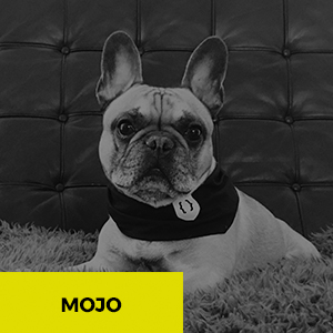 MOJO web support